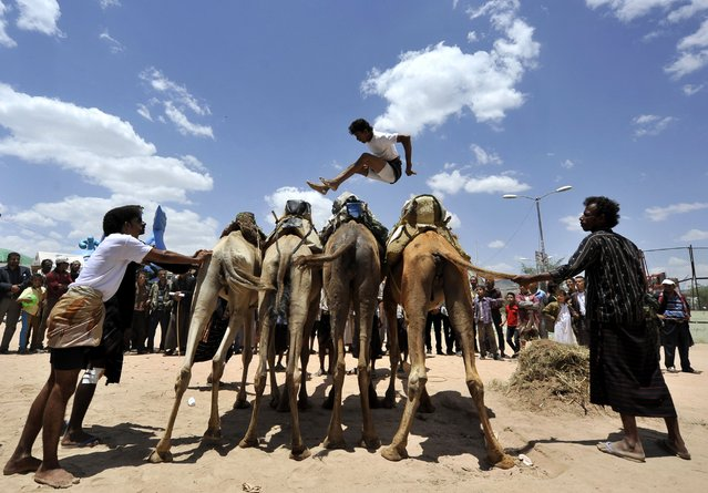 A Yemeni man leaps over four camels during the Sana'a Summer Festival in Sana'a, Yemen, August 28, 2014. The tradition of camel jumping is more popular in Yemen. The tourist festival seeks to revive the tourism sector in the country after a four-year hiatus due to political chaos and security instability. (Photo by Yahya Arhab/EPA)