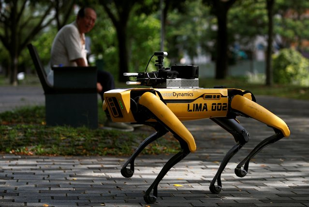 A four-legged robot dog called SPOT patrols a park as it undergoes testing to be deployed as a safe distancing ambassador, following the coronavirus disease (COVID-19) outbreak, in Singapore on May 8, 2020. (Photo by Edgar Su/Reuters)