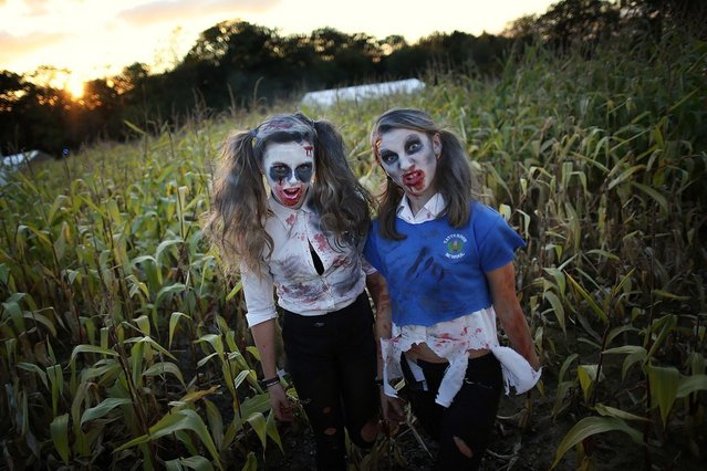 Visitors to the Shocktober Fest dressed as zombies pose at Tulleys Farm  on October 6, 2012 in Turners Hill, England. People dressed as zombies from around the United Kingdom have converged on Tulleys Farm in an attempt to set a new Guinness World Record for the most zombies together in one place