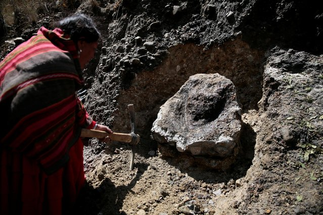"""An Aymara woman removes a stone which bears an impression that locals refer to as """"Devil face"""", as a shrine frequented by indigenous witch doctors is cleared to expand a main highway between La Paz and El Alto, Bolivia, August 24, 2016. (Photo by David Mercado/Reuters)"""