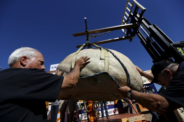 Workers guide a pumpkin toward a scale during the 42nd annual Safeway World Championship Pumpkin Weigh-off in Half Moon Bay, California October 12, 2015. (Photo by Stephen Lam/Reuters)