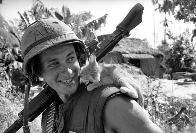 While carrying machine gun on one shoulder, L/Cpl. Henry Williams takes a few moments out from the business of war to play with kitten on other shoulder in South Vietnam on January 17, 1966. Williams found kitten in village that had been bombed and strafed by U.S. Air force planes minutes before in preparation for U.S. Marine attack on Ben Dau 3, some 15 miles southwest of Danang, South Vietnam. Williams is from Ferndale, New York. (Photo by Eddie Adams/AP Photo)