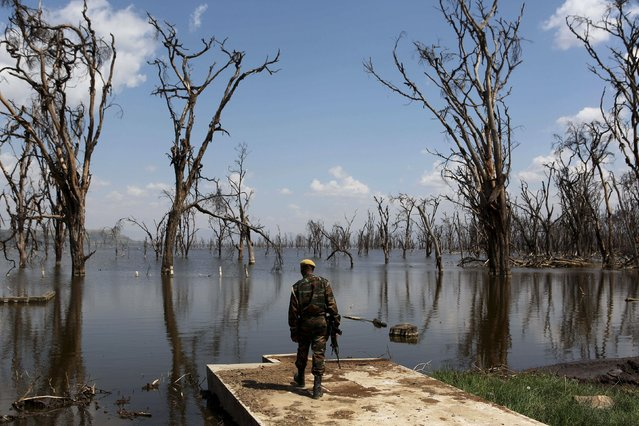 A park ranger surveys damage caused by flooding at Lake Nakuru National Park, Kenya, August 18, 2015. (Photo by Joe Penney/Reuters)