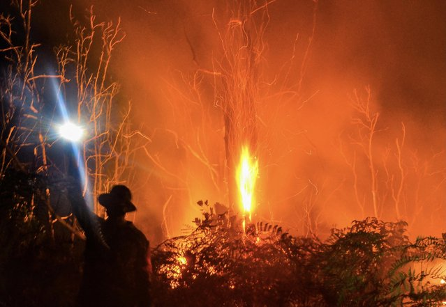 Firefighters battle a forest fire in Pekanbaru, Indonesia's Riau province on March 2, 2021, amid an increase of hotspots in the region. (Photo by Wahyudi/AFP Photo)