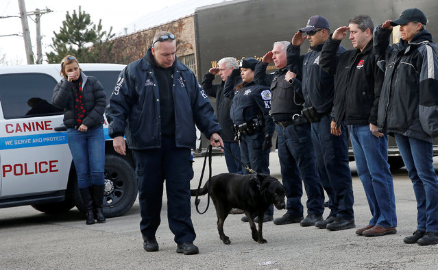 """Chicago Police officers salute Officer Michael Walters and his explosives detection canine """"Bob"""" as they arrive at the Niles Veterinary Hospital where the dog is to be humanely euthanized after being diagnosed with brain cancer in Niles, Illinois, U.S., December 7, 2016. (Photo by Jim Young/Reuters)"""