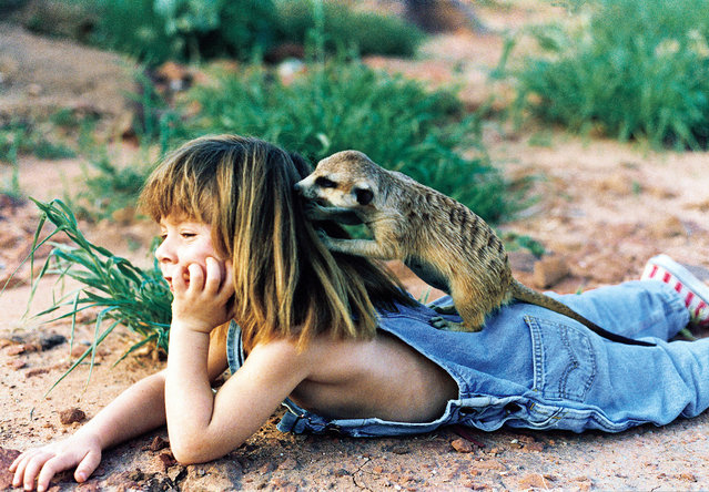 Tippi, aged 6 busy with two meerkats (suricates) in Namibia, 1996. (Photo by Sylvie Robert/Barcroft Media)
