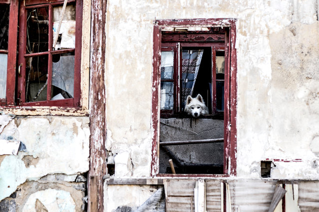 """Dog"". (Photo by Graham Fink/Riflemaker)"