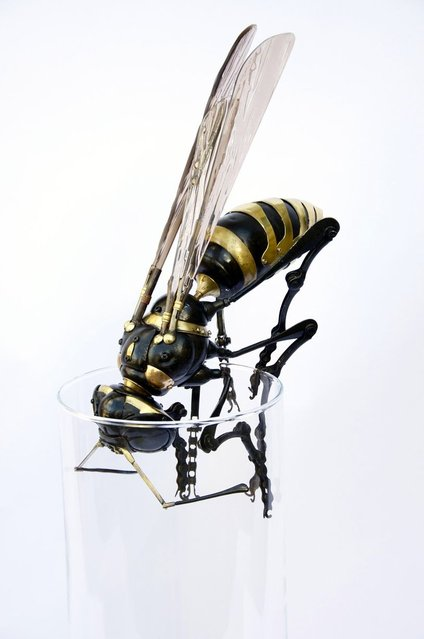 Wasp by by Edouard Martinet. (Photo by Edouard Martiniet/Caters News)