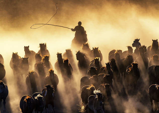 A Kazakh herdsman grazes a flock of galloping horses on the grassland in Hexigten Banner of Chifeng city, north China's Inner Mongolia Autonomous Region on November 19, 2018. (Photo by Imaginechina/Rex Features/Shutterstock)
