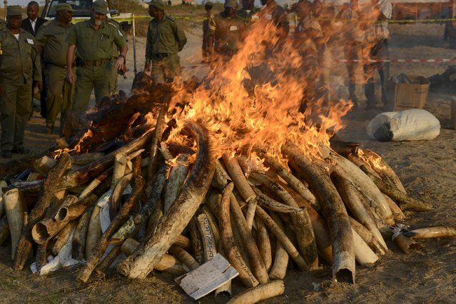 Conservation officials look on as they burn 2.5 tonnes of seized ivory and rhino horn in Maputo, July 6, 2015. Mozambique burned the haul as part of a campaign to end an illicit trade that is fueling a wave of big animal poaching in Africa, a conservation group said. The Wildlife Conservation Society (WCS) said in a statement that over 2,400 kgs (5,280 lbs) of ivory and 86 pieces of rhino horn weighing 193.5 kgs were put to the torch, in the first major destruction of rhino horn ever. (Photo by Grant Lee Neuenburg/Reuters)
