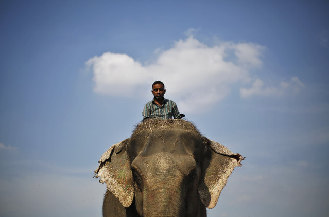 A mahout rides his elephant on the banks of the river Yamuna in New Delhi, March 17, 2015. (Photo by Adnan Abidi/Reuters)