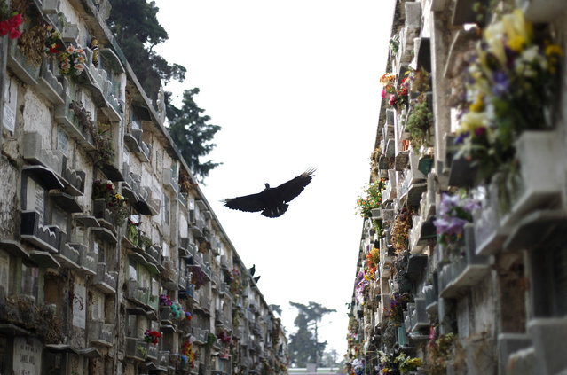 A vulture flies in between rows of crypts at the Cemetery General in Guatemala City March 25, 2013. If a lease on a grave has expired or not been paid, grave cleaners will break open the crypts to remove and rebury the bodies. (Photo by Jorge Dan Lopez/Reuters)