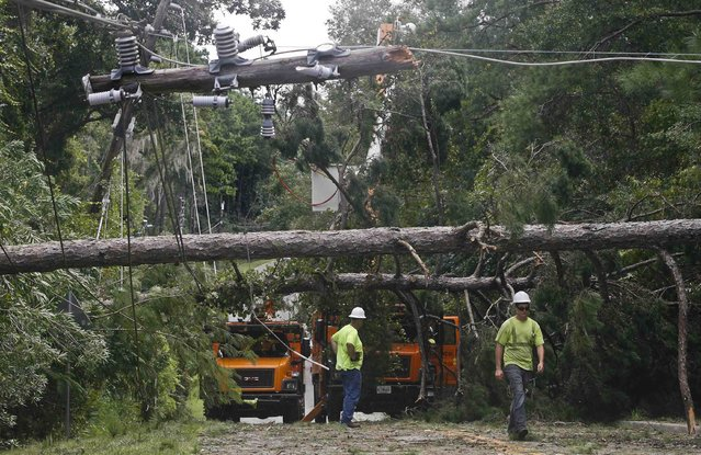 Workers remove downed trees during cleanup operations in the aftermath of Hurricane Hermine in Tallahassee, Florida September 2, 2016. (Photo by Phil Sears/Reuters)