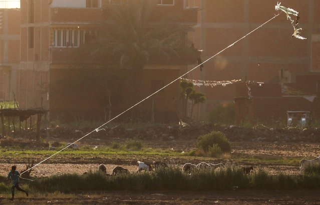 """A boy flies a handmade kite near sheep, in agriculture land named """"El Shouna"""" at el-Marg district, east of Cairo, amidst the spread of the coronavirus disease (COVID-19), Egypt, June 10, 2020. (Photo by Amr Abdallah Dalsh/Reuters)"""