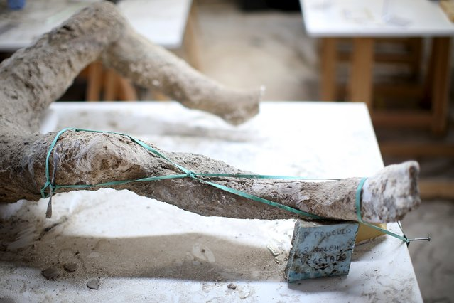 Elastic holds pieces of bone and plaster together after restoration work in the ancient Roman city, Pompeii,  October 13, 2015. (Photo by Alessandro Bianchi/Reuters)