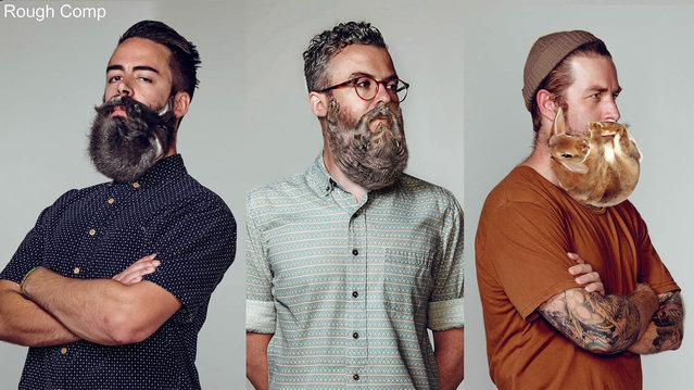 Animal Beards By David Kiefaber