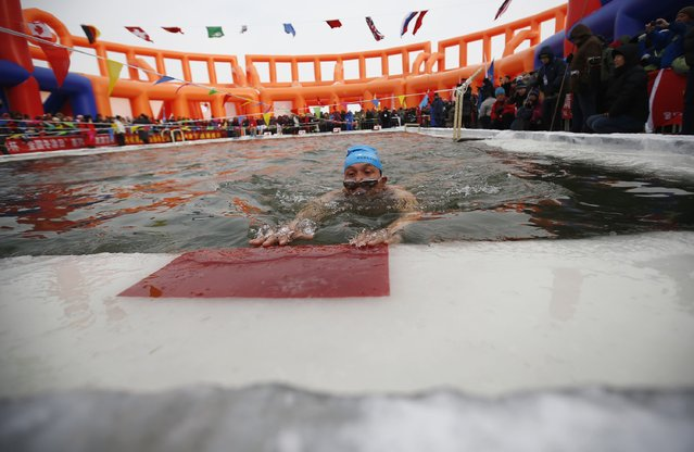 A swimmer reaches the finish line in a pool carved into thick ice covering the Songhua River during the Harbin Ice Swimming Competition in the northern city of Harbin, Heilongjiang province January 5, 2015. (Photo by Kim Kyung-Hoon/Reuters)