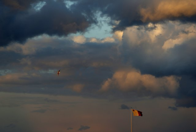 A seagull flies over a Maltese flag at sunset in Valletta, Malta, January 28, 2015. (Photo by Darrin Zammit/Reuters)