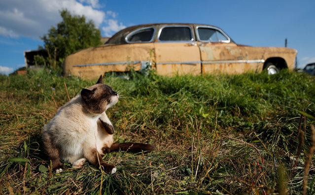 A cat sits in front of a retro car owned by retired mechanic Mikhail Krasinets at an open-air museum of Soviet-era vehicles in the village of Chernousovo, Tula region, Russia on September 27, 2018. In the remote village of Chernousovo, retired mechanic Mikhail Krasinets tends to more than 300 ramshackle, Soviet-era cars, remnants of a once vibrant auto industry that crumbled with the fall of the Soviet Union. (Photo by Maxim Shemetov/Reuters)