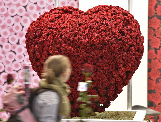 A woman passes a big heart made of red roses at the international trade fair for plants in Essen, Germany, Wednesday, January 27, 2016. Over 1600 exhibitors from 50 countries present the latest trends at the world's leading trade fair for horticulture. (Photo by Martin Meissner/AP Photo)
