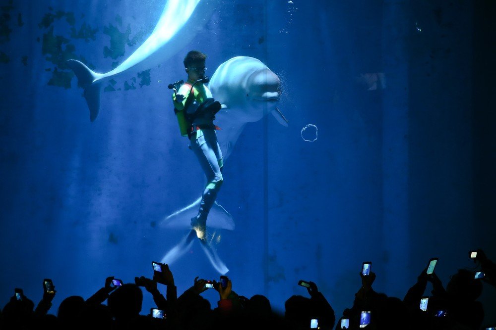 White Whales Perform in China