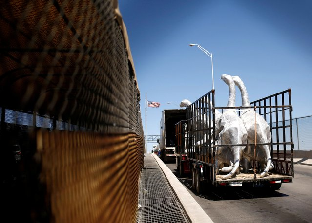 Dinosaur figures are transported along the Cordova of the Americas international border bridge towards El Paso, Texas, U.S., after the U.S. extended limits on non-essential travel at land ports of entry due to the coronavirus disease (COVID-19) outbreak, in Ciudad Juarez, Mexico September 20, 2021. (Photo by Jose Luis Gonzalez/Reuters)