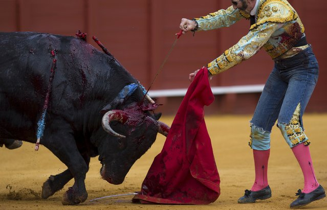 Spanish matador Juan Jose Padilla kills a bull with a sword during a bullfight at The Maestranza bullring in the Andalusian capital of Seville, southern Spain April 25, 2015. (Photo by Marcelo del Pozo/Reuters)