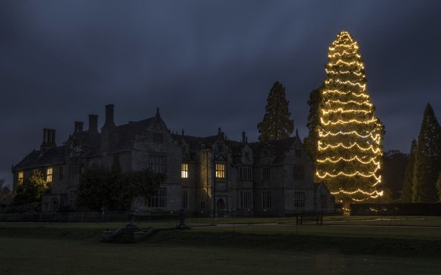 A 36 metre Giant Redwood tree is lit up for Christmas at Wakehurst Place on November 07, 2017 in Haywards Heath, England. 1800 low-energy lamps are being hung by specialists from Wakehurst's Conservation and Woodlands Unit in a process that takes two days. The fully lit tree can be seen by pilots flying into nearby Gatwick Airport. (Photo by Dan Kitwood/Getty Images)
