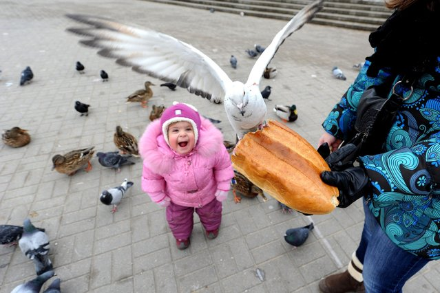 Mother and her child feed birds in the Belarus capital Minsk, on February 6, 2014. (Photo by Viktor Drachev/AFP Photo)