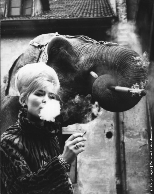 Elephant tamer Monique Holzmuller having a cigarette with one of her elephants