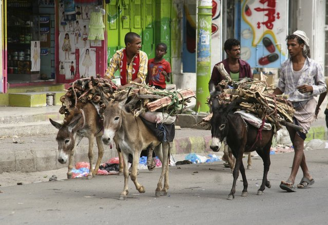 People use donkeys to transport firewood amid an acute fuel shortage in Yemen's southwestern city of Taiz May 19, 2015. (Photo by Reuters/Stringer)
