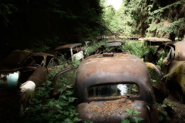 An impressive car graveyard in the middle of a pine forest in Chatillon, a small village in Belgium. Rumours have it that these cars (a Chevy, Studebaker and Buick, among others) belonged to American soldiers who left them behind after World War II. The graveyard has been gone since 2012. (Photo by Vincent Jansen)