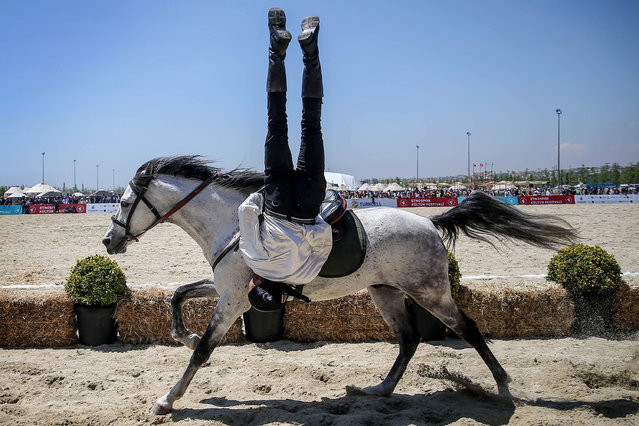 A man performs on horse during Ethnosports Culture Festival which takes place at Yenikapi Square in Istanbul, Turkey on May 11, 2017. The second annual Ethnosports Culture Festival spotlighting Turkic sports and cultures from legendary ages past aims to promote and revive sports and cultures unique to ancient Turkic life. There are feature events including mounted archery, horse riding, oil wrestling, traditional Turkic and Central Asian sports, and folk music concerts. (Photo by Berk Ozkan/Anadolu Agency/Getty Images)