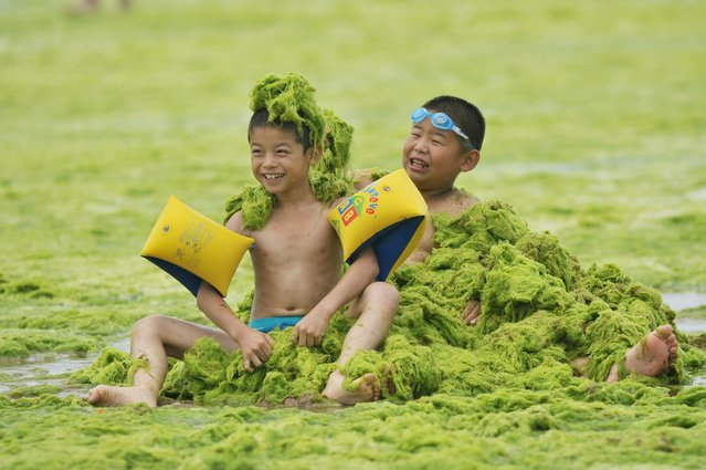 Children play at a beach covered by a thick layer of green algae on July 20, 2015 in Qingdao, China. A large quantity of non-poisonous green seaweed, enteromorpha prolifera, hit the Qingdao coast in June and July this year. (Photo by ChinaFotoPress/ChinaFotoPress via Getty Images)