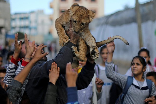 A Palestinian man carries a lion cub as he shows it to children in Rafah refugee camp in the southern Gaza Strip on December 4, 2019. (Photo by Ibraheem Abu Mustafa/Reuters)
