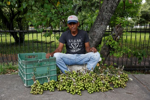 """Orlando Holguin poses for a picture next to tropical fruits called """"Mamones"""" at his street stall in La Fria, Venezuela, June 2, 2016. (Photo by Carlos Garcia Rawlins/Reuters)"""