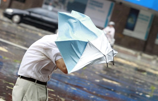 A man is caught in strong gusts from Typhoon Soudelor in Taipei, Taiwan, Saturday, August 8, 2015. At least four people were killed and four were missing when powerful Typhoon Soudelor slammed into Taiwan, authorities said Saturday. The storm approached the island late Friday, bringing heavy rains and strong gusts. Trees, traffic lights and power lines were down in many parts of the island. (Photo by Chiang Ying-ying/AP Photo)