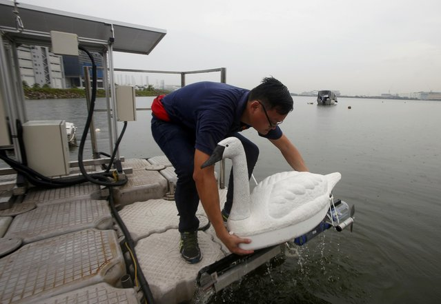 A researcher retrieves a NUSwan (New Smart Water Assessment Network) autonomous watercraft that is disguised as a swan to monitor water quality at a reservoir in Singapore August 12, 2015. The robot swans, developed by a team of researchers from the National University of Singapore's Environmental Research Institute, blend into the environment, using GPS to navigate their way in a water body to test water quality and watch for pollutants and contaminants. (Photo by Edgar Su/Reuters)