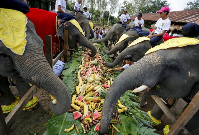 Elephants eat fruits and vegetables at Winga Baw Elephant Conservation Camp during the ceremony to mark World Elephant Day at Bago Region, Myanmar, 12 August 2017. (Photo by Lynn Bo Bo/EPA/EFE)