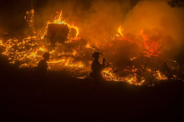 Firefighters battle the King Fire in Fresh Pond, California September 17, 2014. (Photo by Noah Berger/Reuters)