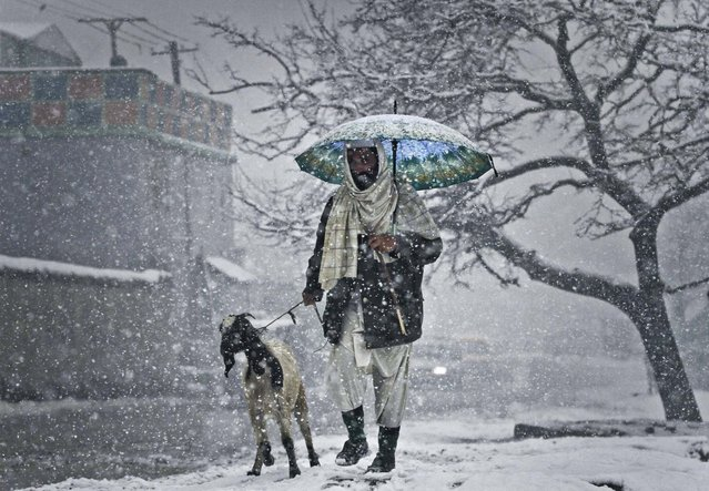 An Afghan man walks with his goat in Kabul, Afghanistan, Decemmber 27, 2012. Temperatures dropped to 1 degrees Celsius (34 Fahrenheit) in Kabul. (Photo by Ahamd Jamshid/AP Photo)