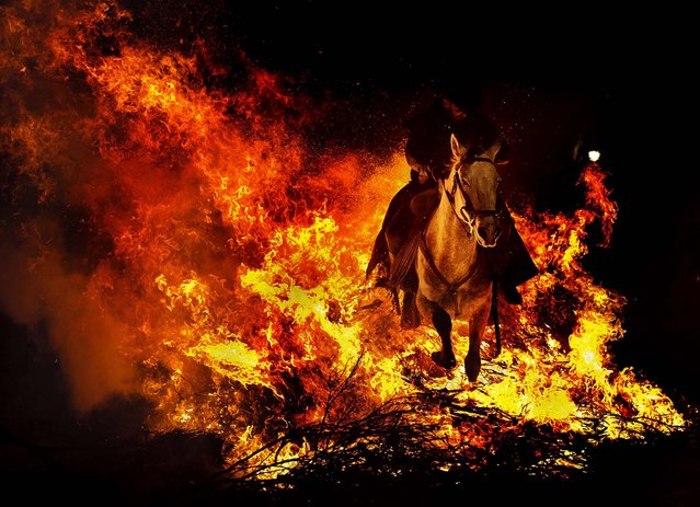 """A man rides a horse through a bonfire in San Bartolome de Pinares, Spain, in honor of Saint Anthony, the patron saint of animals, January 16, 2013. On the eve of Saint Anthony's Day, hundreds ride their horses through the narrow cobblestone streets of the small village of San Bartolome during the """"Luminarias"""", a traditional festival that dates back 500 years and is meant to purify the animals with the smoke of the bonfires, and protect them for the year to come. (Photo by Daniel Ochoa de Olza/Associated Press)"""