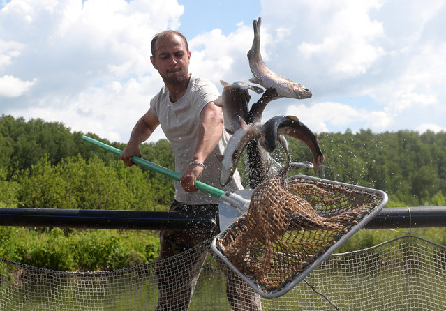 "Entrepreneur Ruslan Namazov at his trout farm in Leninogorsk District of Tatarstan, Russia on September 17, 2020. Namazov and his father, who share the business, purchased equipment for their farm with a grant from Russia's national project ""Small and Medium-Sized Businesses and Support of the Individual Entrepreneur Initiative"". (Photo by Yegor Aleyev/TASS)"