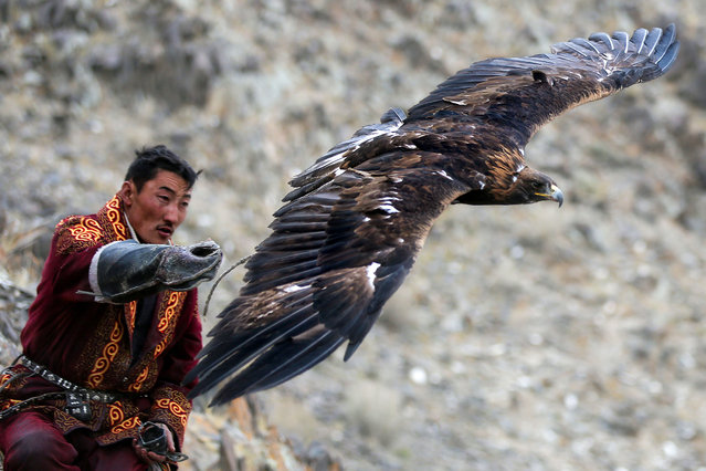 Also the majestic eagles at work in many different scenarios. (Photo by Batzaya Choijiljav/Caters News)