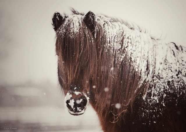 """SNow..."" (Photo by Gigja Einarsdottir)"