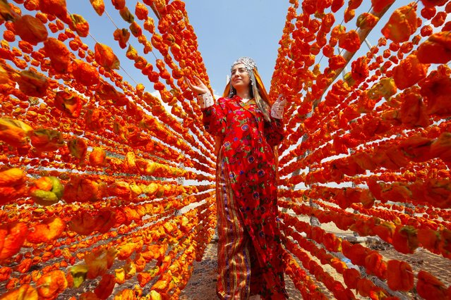 A woman arranges peppers for drying in the sun as seasonal workers process tomatoes after a harvest in Gaziantep, Turkey on August 10, 2021. Drying of peppers, zucchinis, eggplants and gherkins began. (Photo by Mehmet Akif Parlak/Anadolu Agency via Getty Images)