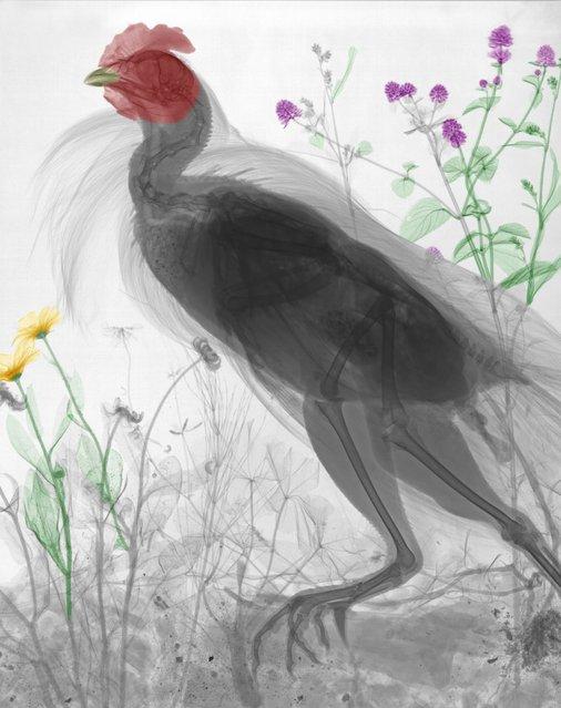"""""""Chicken"""". (Photo by Arie van't Riet)"""