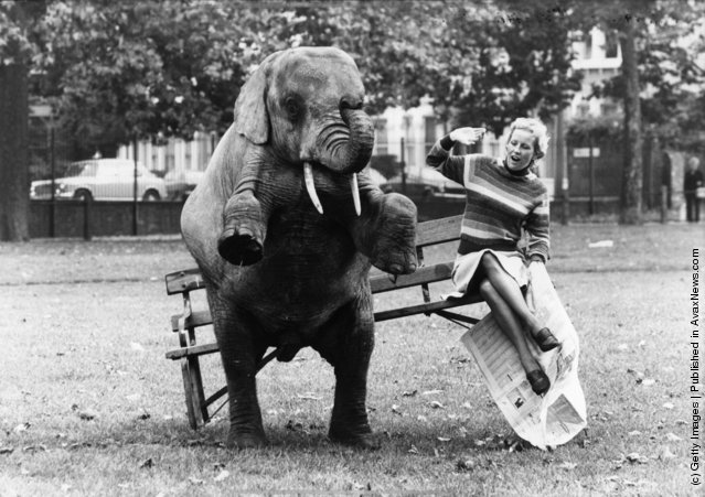 Rosie the elephants proves to be heavier than her companion and tips the park bench when she tries to sit down