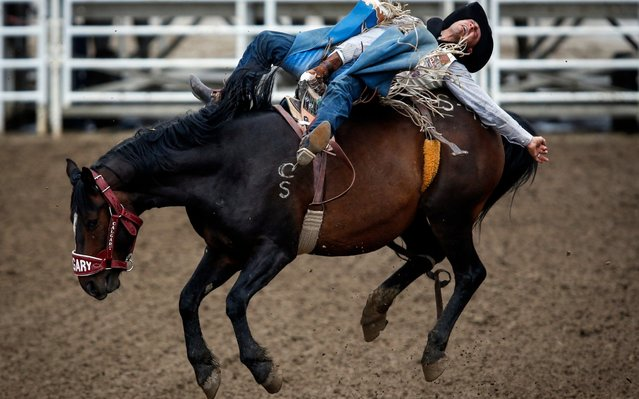Seth Hardwick, of Montana, rides Saturn Rocket in bareback rodeo action during the Calgary Stampede in Calgary, Alberta, Friday, July 5, 2019. (Photo by Jeff McIntosh/The Canadian Press via AP Photo)