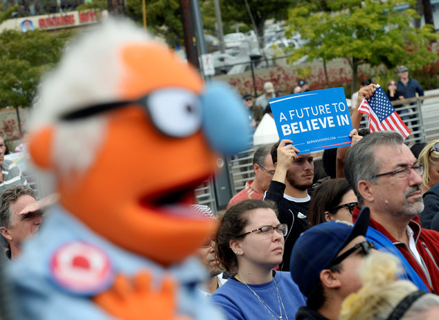 A look-a-like puppet of Democratic U.S. presidential candidate Bernie Sanders is held up during campaign event in San Pedro, California , U.S. May 27, 2016. (Photo by Kevork Djansezian/Reuters)